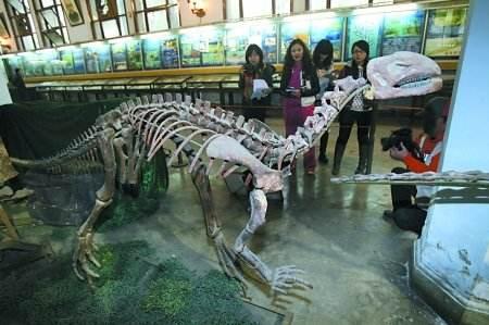 亚博yabo下载恐龙化石